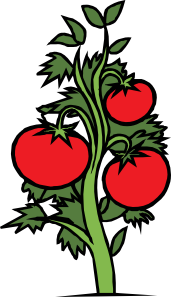 1245694766439408861johnny_automatic_tomato_plant.svg.med